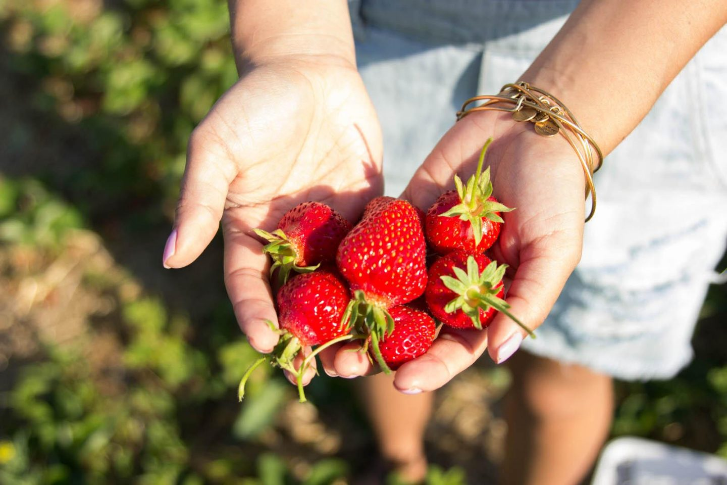 Strawberry Picking06252016_3056