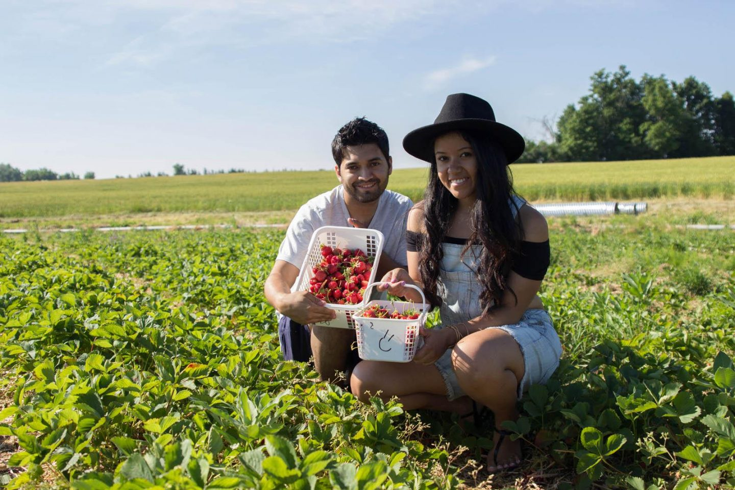 Strawberry Picking06252016_3208